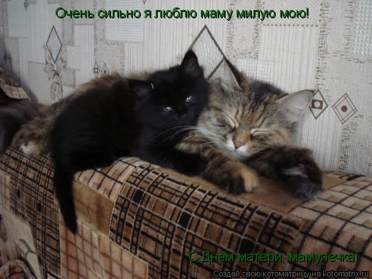 Котоматрица: Очень сильно я люблю маму милую мою! С Днём матери, мамулечка!