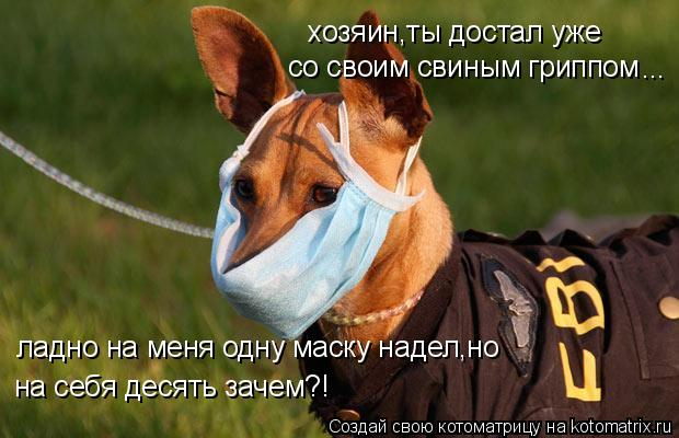 Котоматрица: хозяин,ты достал уже со своим свиным гриппом ... ладно на меня одну маску надел,но на себя десять зачем?!