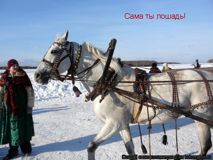 Котоматрица: Сама ты лошадь!