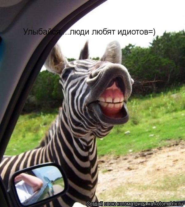 Котоматрица: Улыбайся....люди любят идиотов=)