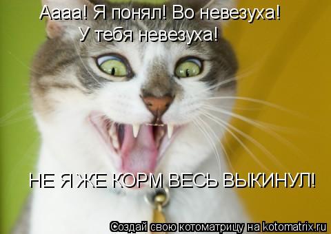 Котоматрица: Аааа! Я понял! Во невезуха! У тебя невезуха! НЕ Я ЖЕ КОРМ ВЕСЬ ВЫКИНУЛ!