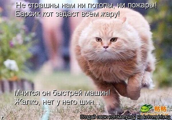 Котоматрица: Не страшны нам ни потопы, ни пожары! Барсик кот задаст всем жару! Мчится он быстрей машин! Жалко, нет у него шин...