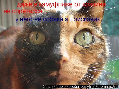 Котоматрица: даже в камуфляже от хозяина не спрятался... у него не собака а поисковик...