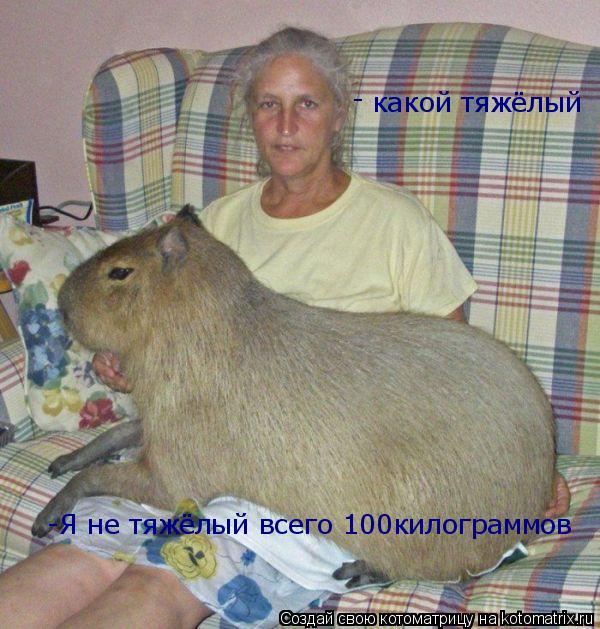 Котоматрица: какой тяжёлый - -Я не тяжёлый всего 100килограммов
