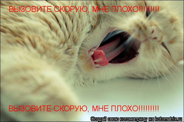 Котоматрица: ВЫЗОВИТЕ СКОРУЮ, МНЕ ПЛОХО!!!!!!!!! ВЫЗОВИТЕ СКОРУЮ, МНЕ ПЛОХО!!!!!!!!!