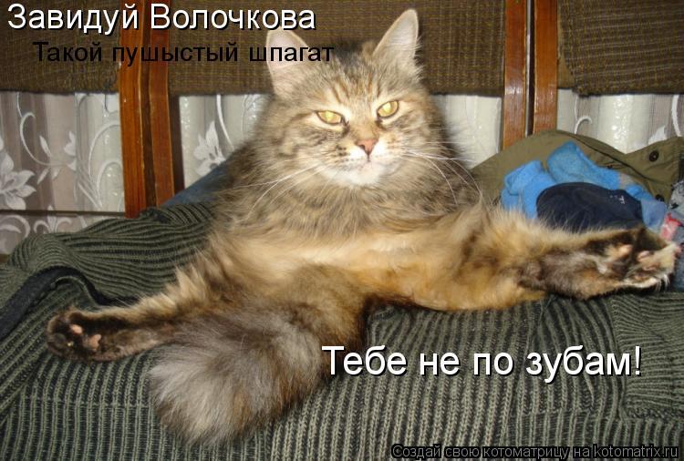 Котоматрица: Завидуй Волочкова Такой пушыстый шпагат Тебе не по зубам!