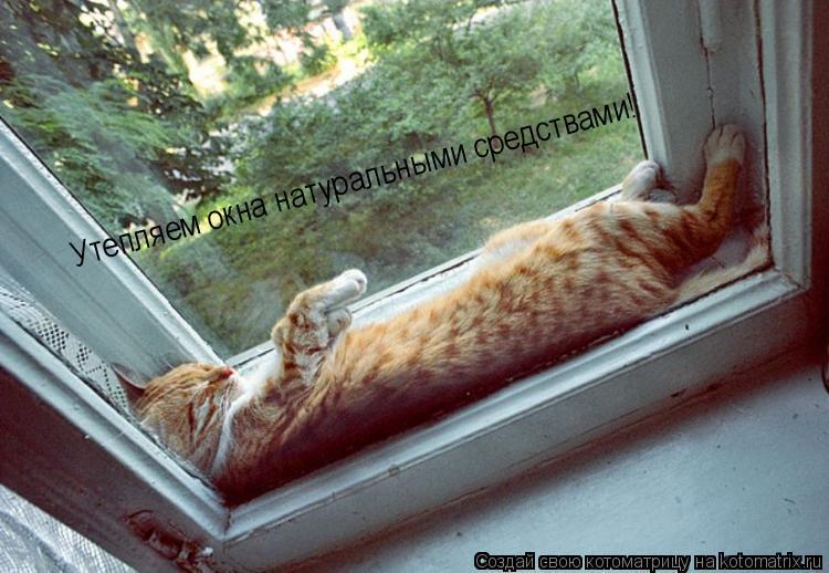 Котоматрица: Утепляем окна натуральными средствами! Утепляем окна натуральными средствами!