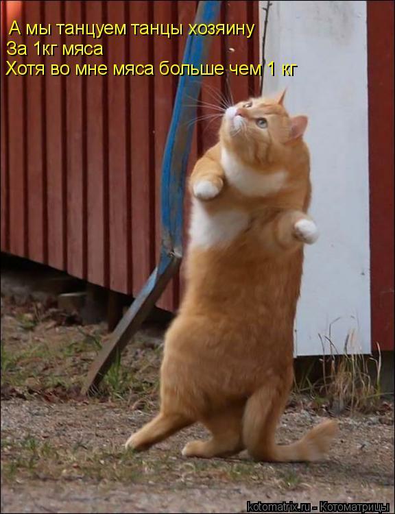 Котоматрица: А мы танцуем танцы хозяину За 1кг мяса  Хотя во мне мяса больше чем 1 кг