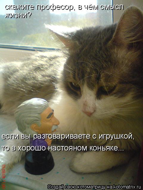 Котоматрица: скажите професор, в чём смысл жизни? если вы разговариваете с игрушкой, то в хорошо настояном коньяке...