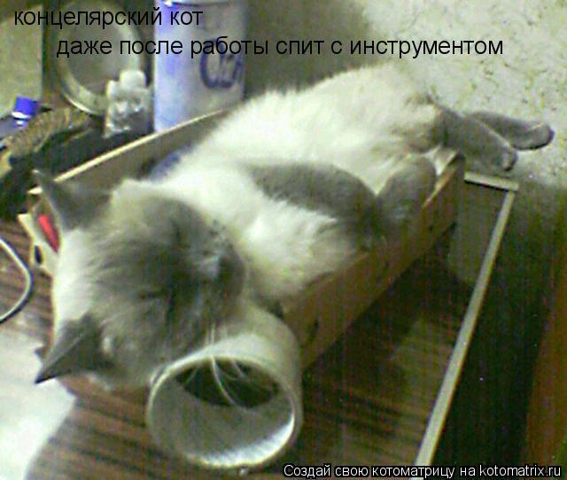 Котоматрица: концелярский кот даже после работы спит с инструментом