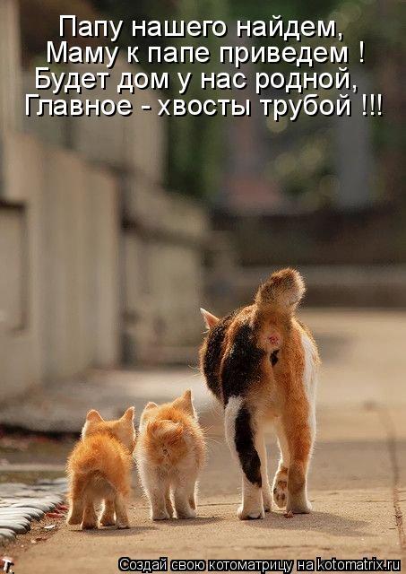 Котоматрица: Папу нашего найдем, Главное - хвосты трубой !!! Будет дом у нас родной, Маму к папе приведем !