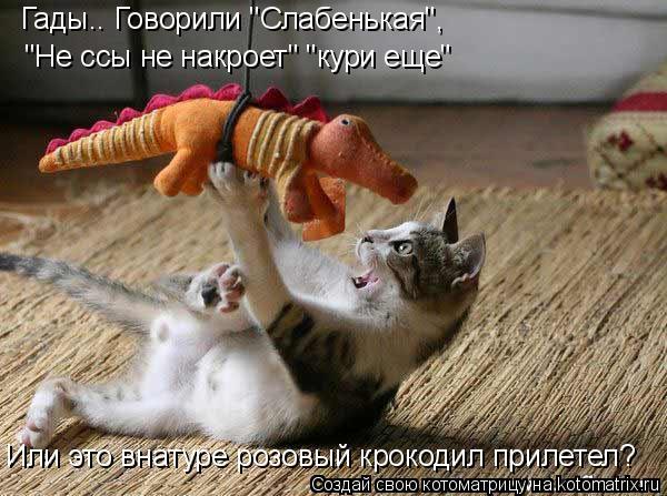 """Котоматрица: Гады.. Говорили """"Слабенькая"""", """"Не ссы не накроет"""" """"кури еще"""" Или это внатуре розовый крокодил прилетел?"""