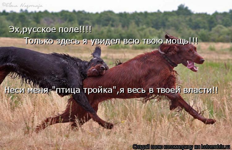 """Котоматрица: Эх,русское поле!!!! Только здесь я увидел всю твою мощь!!! Неси меня-""""птица тройка"""",я весь в твоей власти!!"""