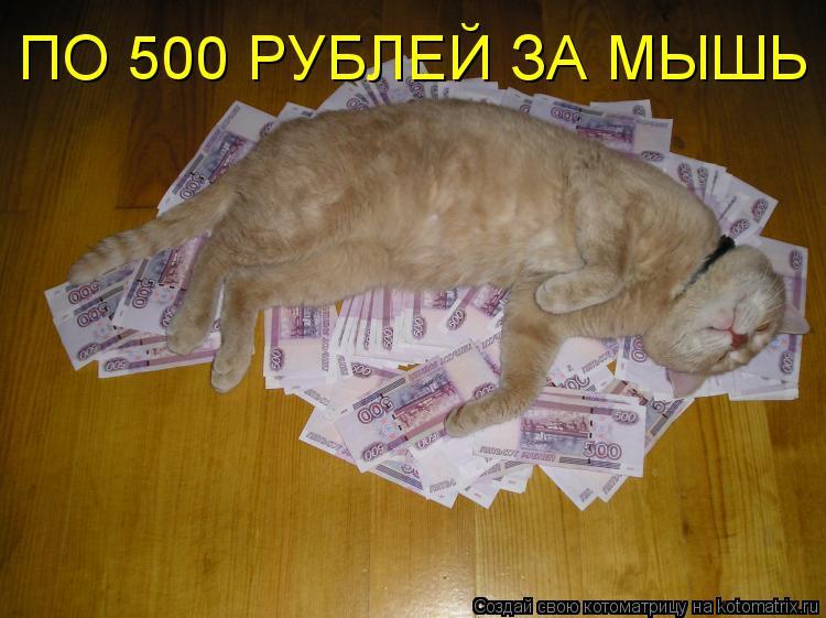 Котоматрица: ПО 500 РУБЛЕЙ ЗА МЫШЬ