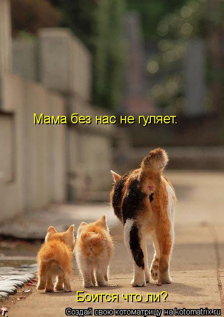 Котоматрица: Мама без нас не гуляет. Боится что ли?