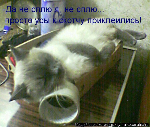 Котоматрица: -Да не сплю я, не сплю... просто усы к скотчу приклеились!