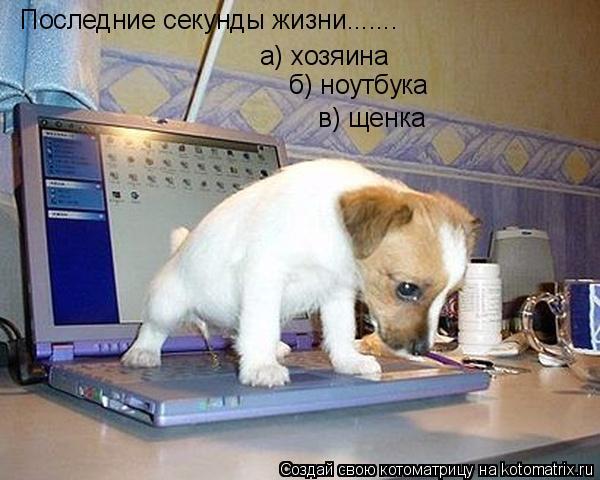 Котоматрица: Последние секунды жизни....... а) хозяина б) ноутбука в) щенка