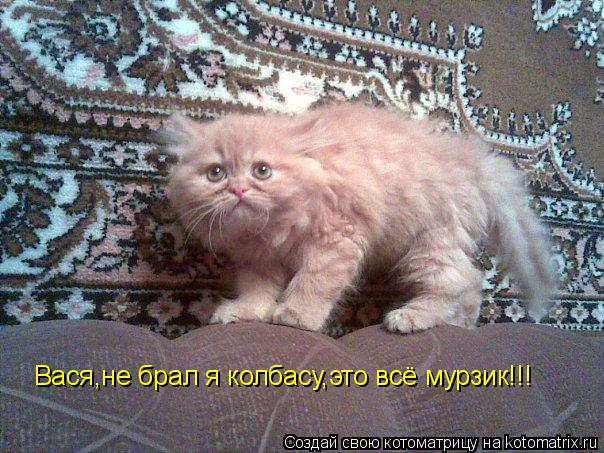 Котоматрица: Вася,не брал я колбасу,это всё мурзик!!!