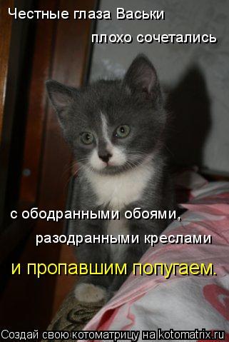 Котоматрица: Честные глаза Васьки плохо сочетались с ободранными обоями, разодранными креслами и пропавшим попугаем.