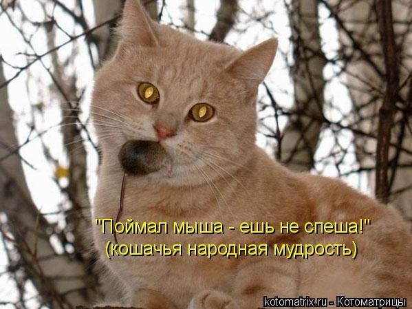 """Котоматрица: """"Поймал мыша - ешь не спеша!"""" (кошачья народная мудрость)"""