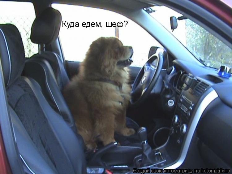 Котоматрица: Куда едем, шеф?