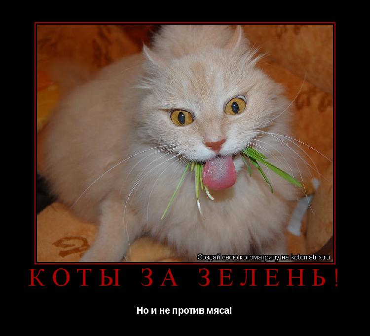 Котоматрица: Коты за зелень! Но и не против мяса!