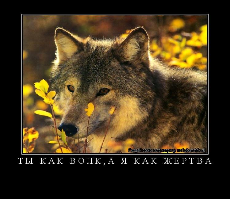 Котоматрица: ты как волк,а я как жертва