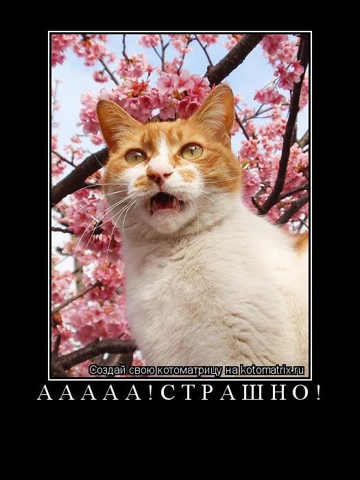 Котоматрица: ааааа!страшно!