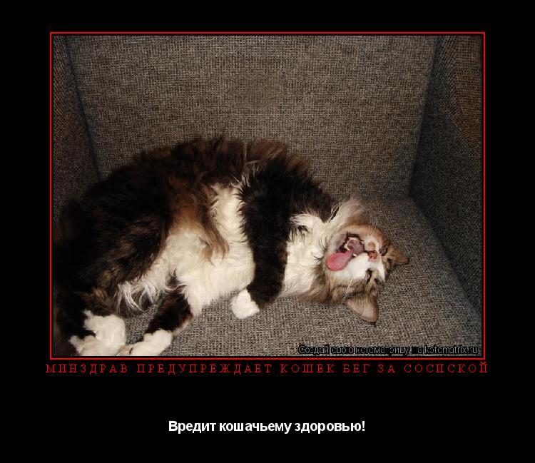 Котоматрица: Минздрав предупреждает кошек бег за сосиской Вредит кошачьему здоровью!