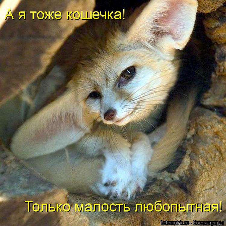 Котоматрица: А я тоже кошечка! Только малость любопытная!