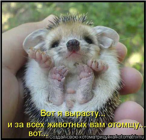 Котоматрица: Вот я вырасту... и за всех животных вам отомщу... вот...