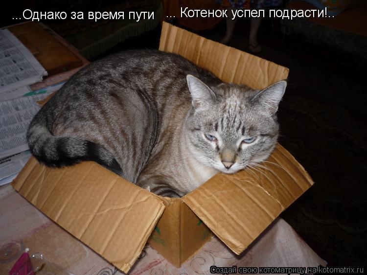 Котоматрица: ...Однако за время пути ... Котенок успел подрасти!..