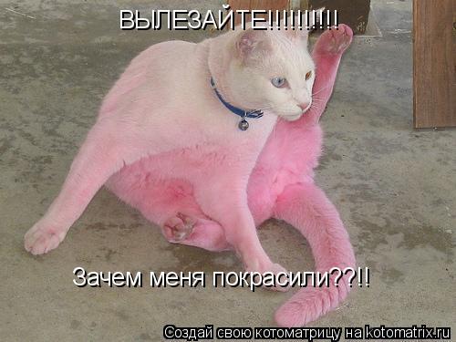 Котоматрица: ВЫЛЕЗАЙТЕ!!!!!!!!!! Зачем меня покрасили??!!