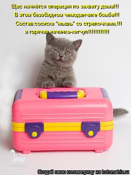 """Котоматрица: Щас начнётся операция по захвату дома!!! В этом безобидном чемоданчике бомба!!! Состав:сосиска """"мышь"""" со стрелочками,!!! и горячая начинка-кетч"""