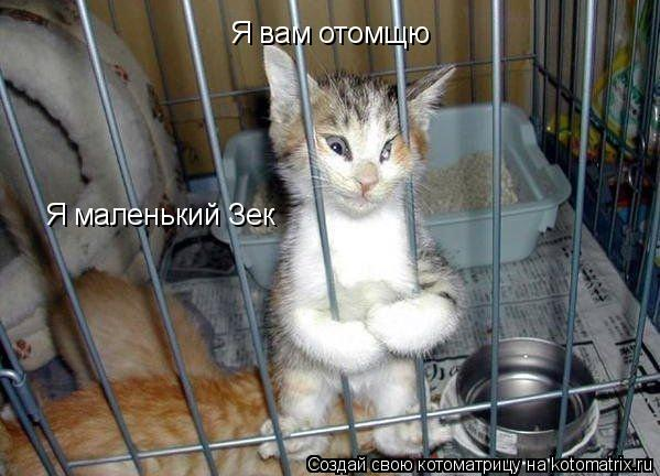 Котоматрица: Я вам отомщю Я маленький Зек