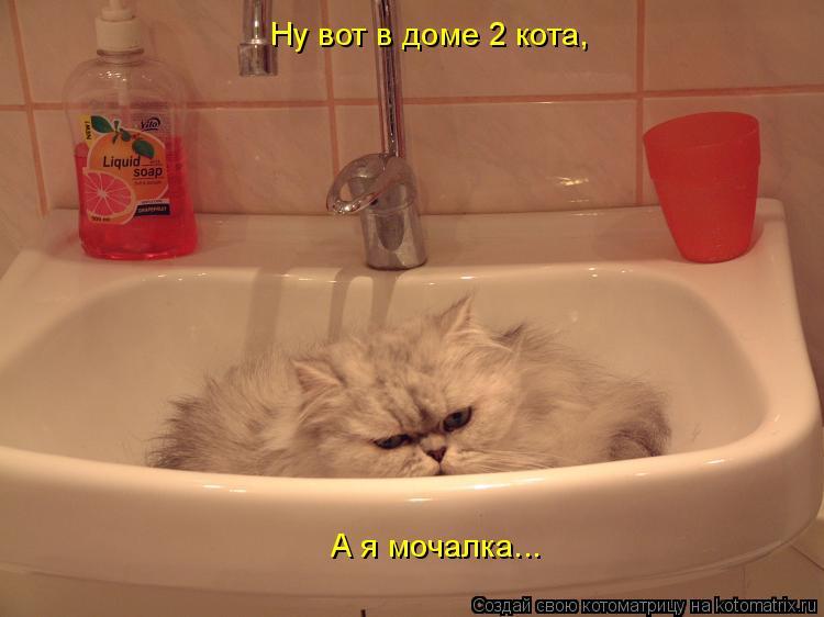 Котоматрица: Ну вот в доме 2 кота, А я мочалка...