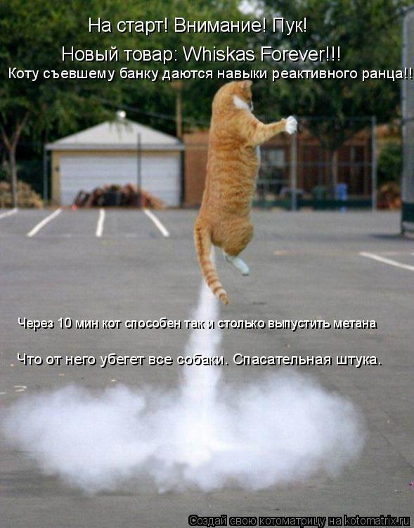 Котоматрица: На старт! Внимание! Пук! Новый товар: Whiskas Forever!!! Коту съевшему банку даются навыки реактивного ранца!!! Через 10 мин кот способен так и стольк