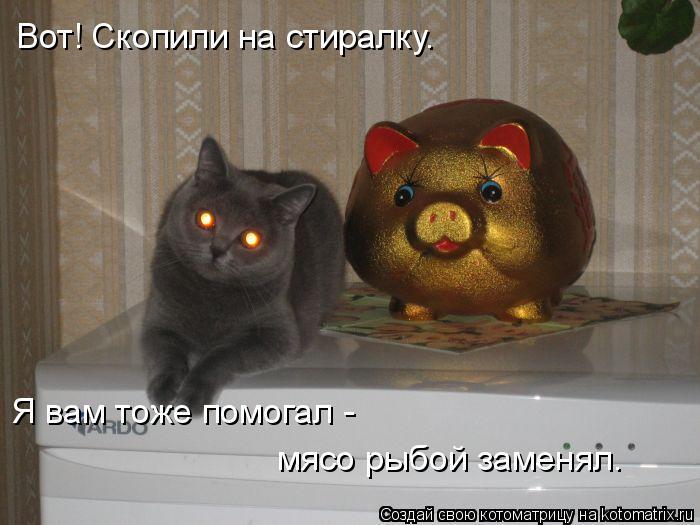 Котоматрица: Вот! Скопили на стиралку. Я вам тоже помогал -  мясо рыбой заменял.