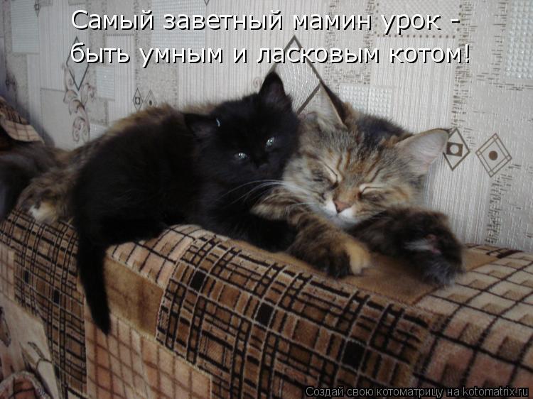Самый заветный мамин урок - быть умным и ласковым котом!