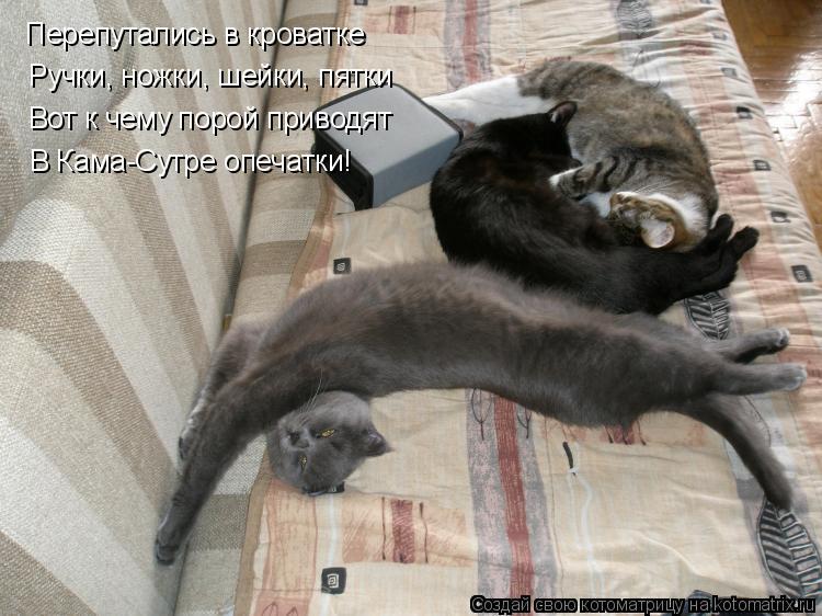 Котоматрица: Перепутались в кроватке Ручки, ножки, шейки, пятки Вот к чему порой приводят В Кама-Сутре опечатки!