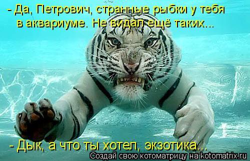 Котоматрица: - Да, Петрович, странные рыбки у тебя - Дык, а что ты хотел, экзотика... в аквариуме. Не видал ещё таких...