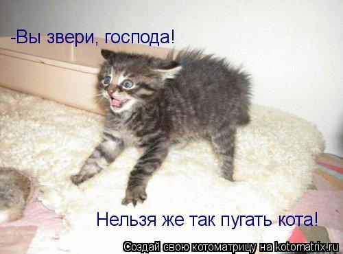 Котоматрица: -Вы звери, господа!  Нельзя же так пугать кота!