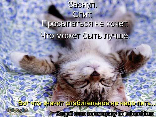 Котоматрица: Заснул. Спит. Просыпаться не хочет. Что может быть лучше. Вот что значит слабительное не надо пить...