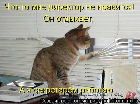 Котоматрица: Что-то мне директор не нравится! Он отдыхает, А я секретарём работаю...