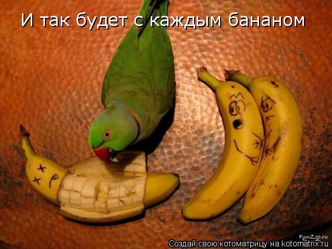 Котоматрица: И так будет с каждым бананом