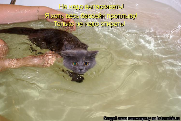 Котоматрица: Я хоть весь бассейн проплыву! Только не надо стирать! Не надо вытаскивать!