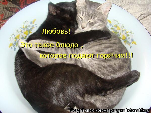 Котоматрица: Любовь! которое подают горячим!!! Это такое блюдо ,