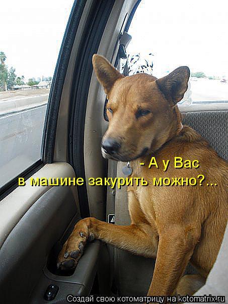 Котоматрица: - А у Вас  в машине закурить можно?...