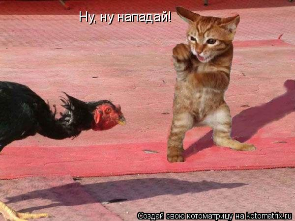 Котоматрица: Ну, ну нападай!