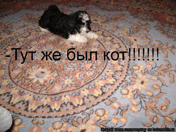 Котоматрица: -Тут же был кот!!!!!!!